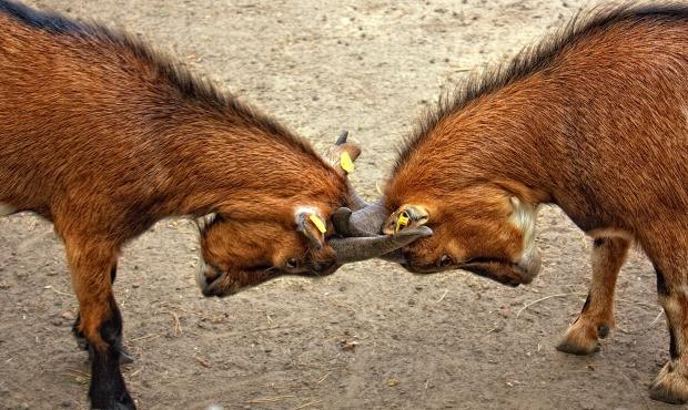 goats-animal-bock-billy-goat-67280